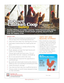 Chicken Coop Safety Tips